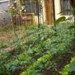 aretxabaleta-apts-and-garden-4618